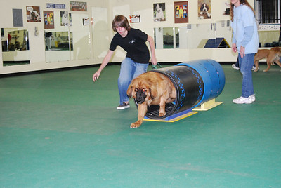 she is the biggest dog in the class, and has no trouble with the barrels.