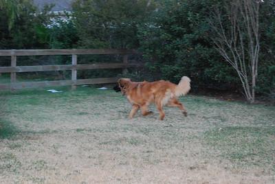 Kellie running