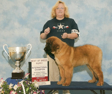 woohoo...way to go Kellie.  We are so proud of you. Picture by Bill Meyer Dog Show Photographers.