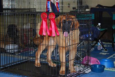 Kellie took two Reserve Best In Show Puppy...woohoo