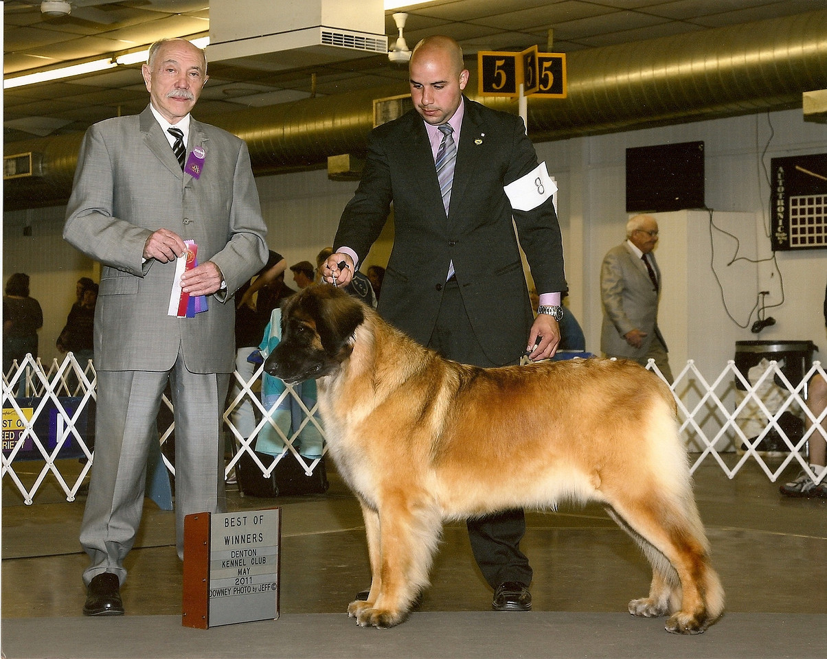 Storm takes her 2nd major, BOW BOO, at the Denton show in May 2011. Thanks so much Chuy!!