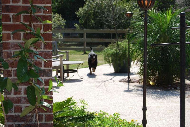 running in the backyard ... woohoo