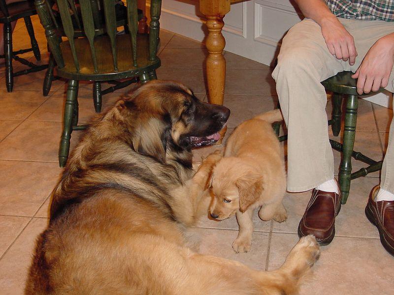 Cosmo and Maya Papaya