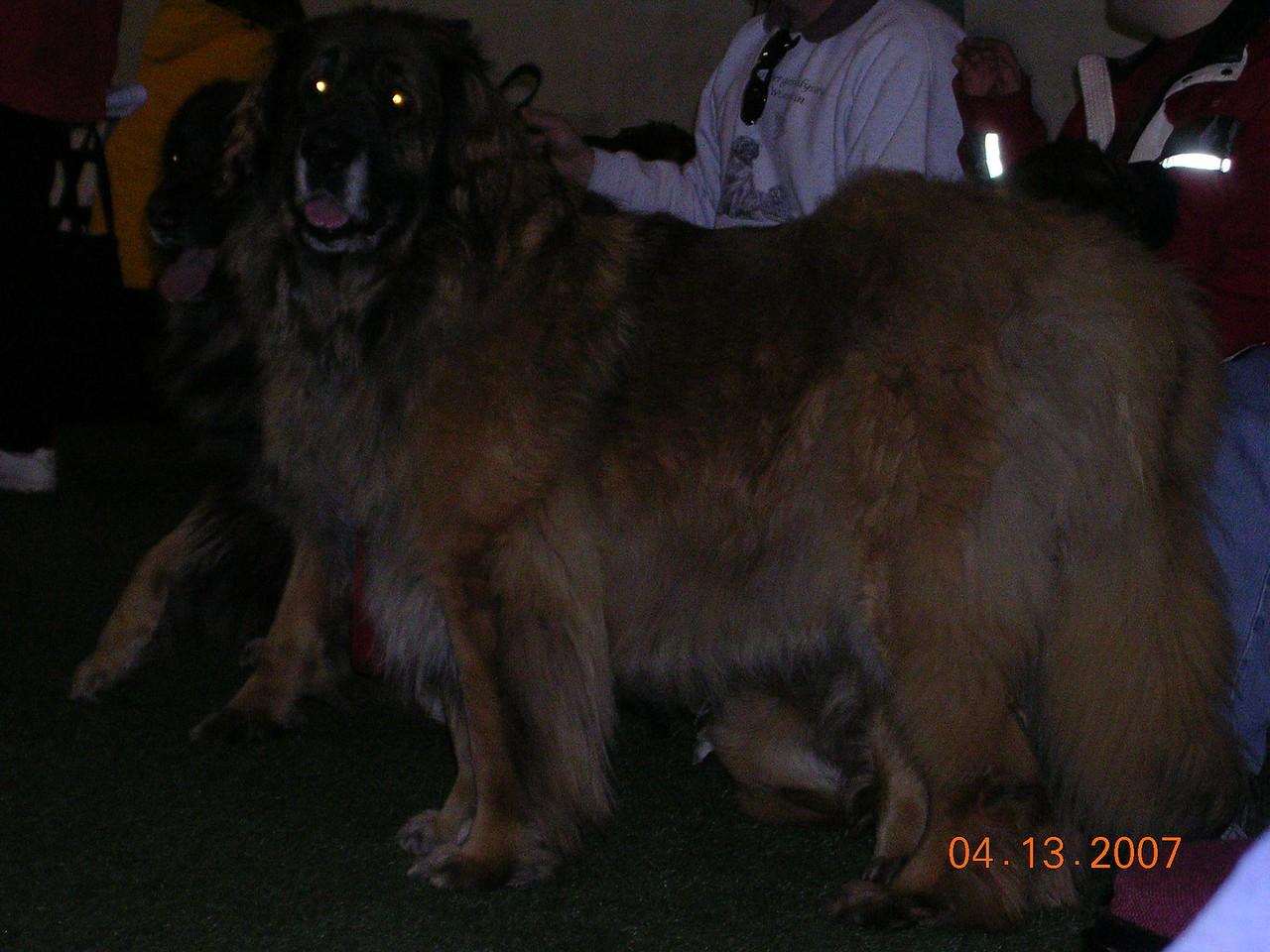 what a big beautiful girl Cheera is!!
