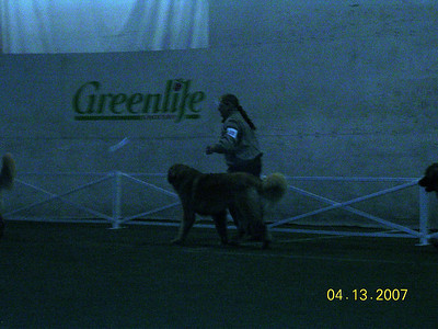 Julie and Odin at puppy sweeps.  Odin took 2nd.