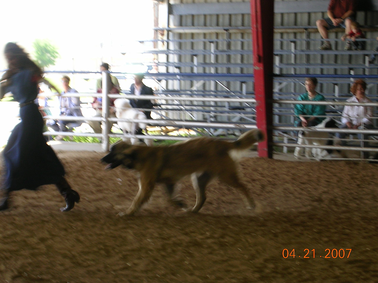 Teresa running with Sienna.  Sienna moves so well!