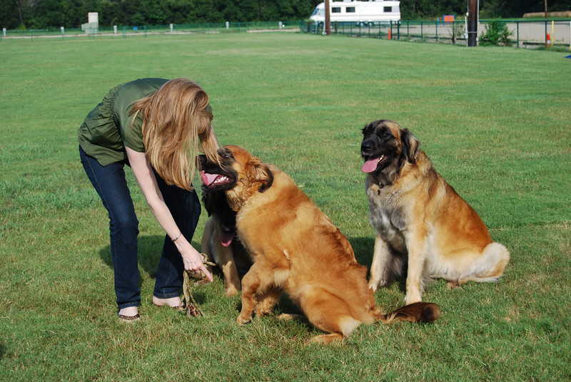 Janis tries to get the dogs to pose.  As you will notice Kellie will have nothing to do with it and high tails it for the shade.