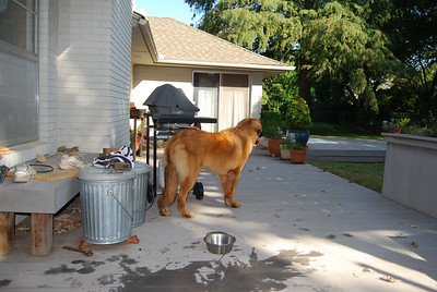 at cousin Pam's...in her backyard.  The dogs love cousin Pam's house!  she feeds them ice cubes.