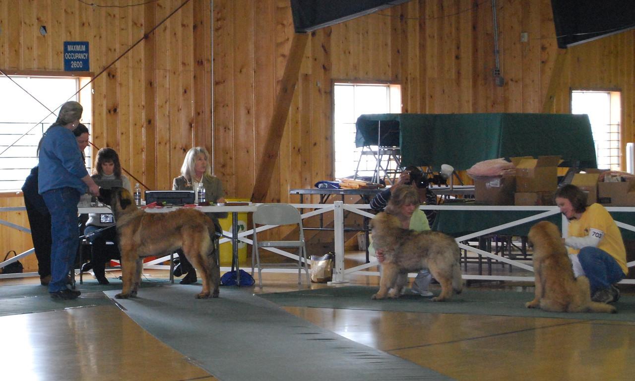 Julie and Logan (Bluebonnet's Cowboy Sanctuary)