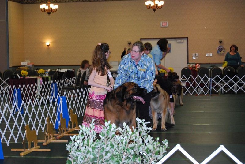 Judge Julie as the judge for the junior handlers