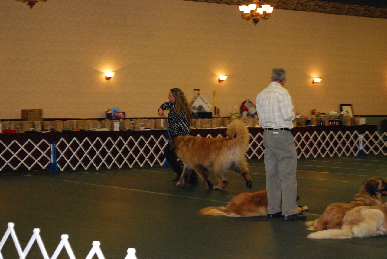 Midas in the Therapy Parade