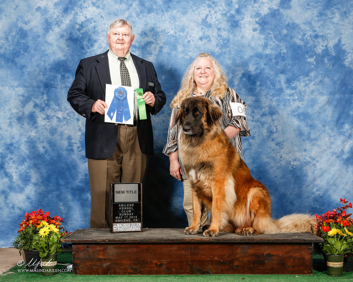 New BN (Beginner Novice) obedience Title!!  way to go Ziva!!