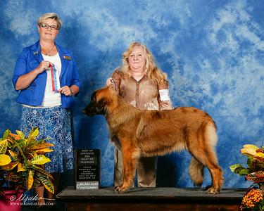 Houston World Dog Show Series - 2014