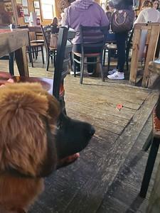 First restaurant as Service Dog