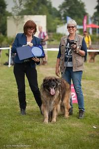 2016_06-12 Leonberger Honden Club Nederland 50 jaar-8991