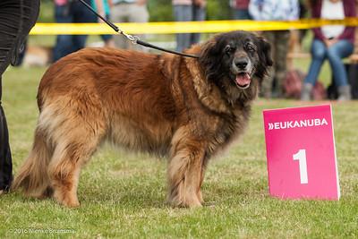 2016_06-12 Leonberger Honden Club Nederland 50 jaar-9010