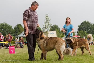2016_06-12 Leonberger Honden Club Nederland 50 jaar-8368