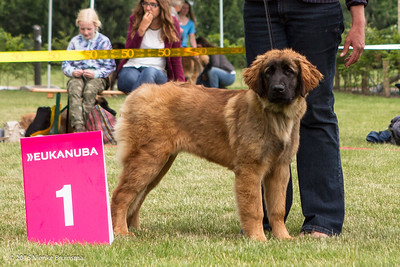 2016_06-12 Leonberger Honden Club Nederland 50 jaar-8358
