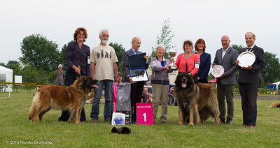 2016_06-12 Leonberger Honden Club Nederland 50 jaar-8455
