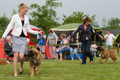 2016_06-12 Leonberger Honden Club Nederland 50 jaar-8344