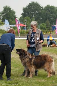 2016_06-12 Leonberger Honden Club Nederland 50 jaar-8988