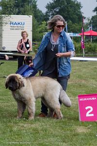 2016_06-12 Leonberger Honden Club Nederland 50 jaar-8339