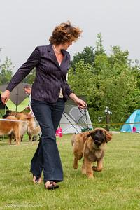 2016_06-12 Leonberger Honden Club Nederland 50 jaar-8366