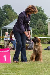 2016_06-12 Leonberger Honden Club Nederland 50 jaar-8351