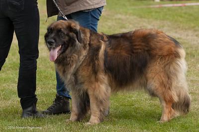2016_06-12 Leonberger Honden Club Nederland 50 jaar-8989