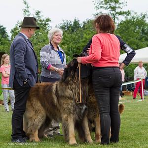 2016_06-12 Leonberger Honden Club Nederland 50 jaar-8436