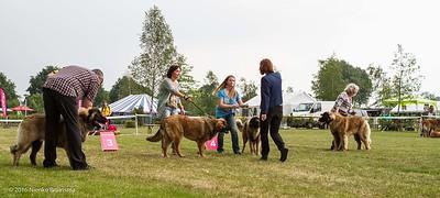 2016_06-12 Leonberger Honden Club Nederland 50 jaar-8370