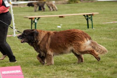 2016_06-12 Leonberger Honden Club Nederland 50 jaar-8997