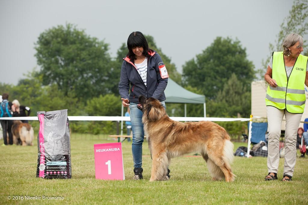 2016_06-12 Leonberger Honden Club Nederland 50 jaar-9253