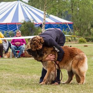 2016_06-12 Leonberger Honden Club Nederland 50 jaar-8442