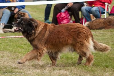 2016_06-12 Leonberger Honden Club Nederland 50 jaar-9000
