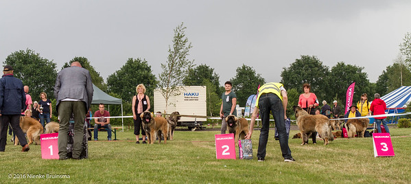 2016_06-12 Leonberger Honden Club Nederland 50 jaar-8381