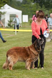 2016_06-12 Leonberger Honden Club Nederland 50 jaar-9006
