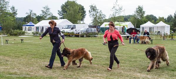 2016_06-12 Leonberger Honden Club Nederland 50 jaar-8429