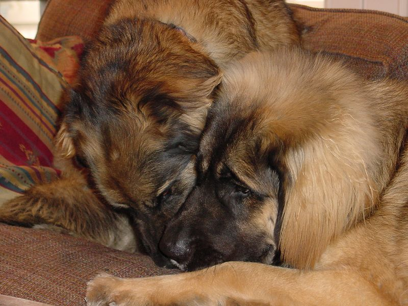 Britta & Cosmo