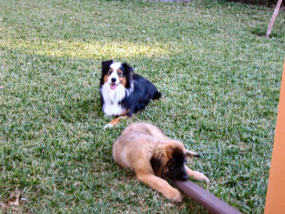 """Rider says...""""Thanks for the new buddy!!!"""" (Sienna proceeds to chew up the drain pipe)"""