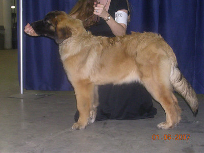 Sienna at her first dog show.  What a pretty girl