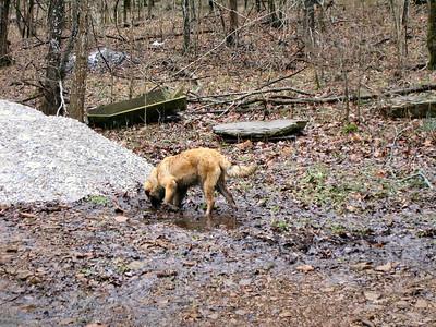 Sienna...muddy girl...explores in her very own wilderness.
