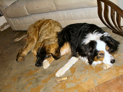 Rider and Sienna taking a siesta.