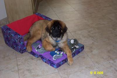 woohoo...pretty Bob has his own futon!!