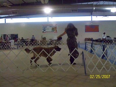 Sienna and Teresa in the ring at the UKC show in Hutto.