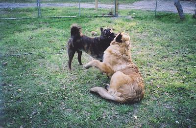 Titan gives his buddy a kiss.