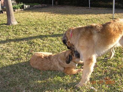 Sienna and Faith outback for a romp.