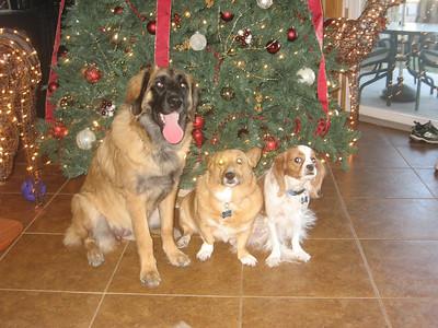 Gracie, Rifle, & Chester Christmas 2008
