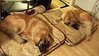 Fricis & Derika.  they love their beds.  how sweet!!!