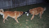 derika and fricis play tug of war ... hmmmm, who will win???
